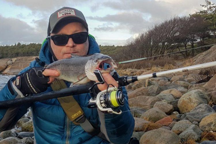 Fiske sjøørret om vinteren. Her er flott sjøørret jeg fikk romjulen.