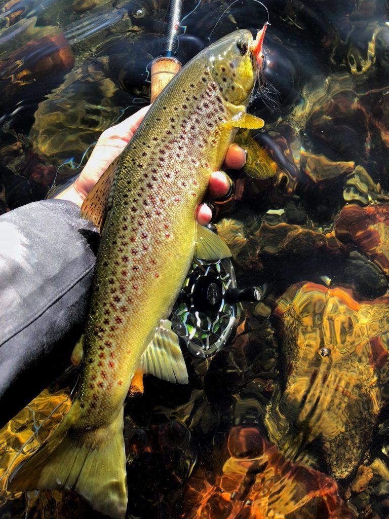 Det å fiske sjøørret med flue på høsten er meget bra.