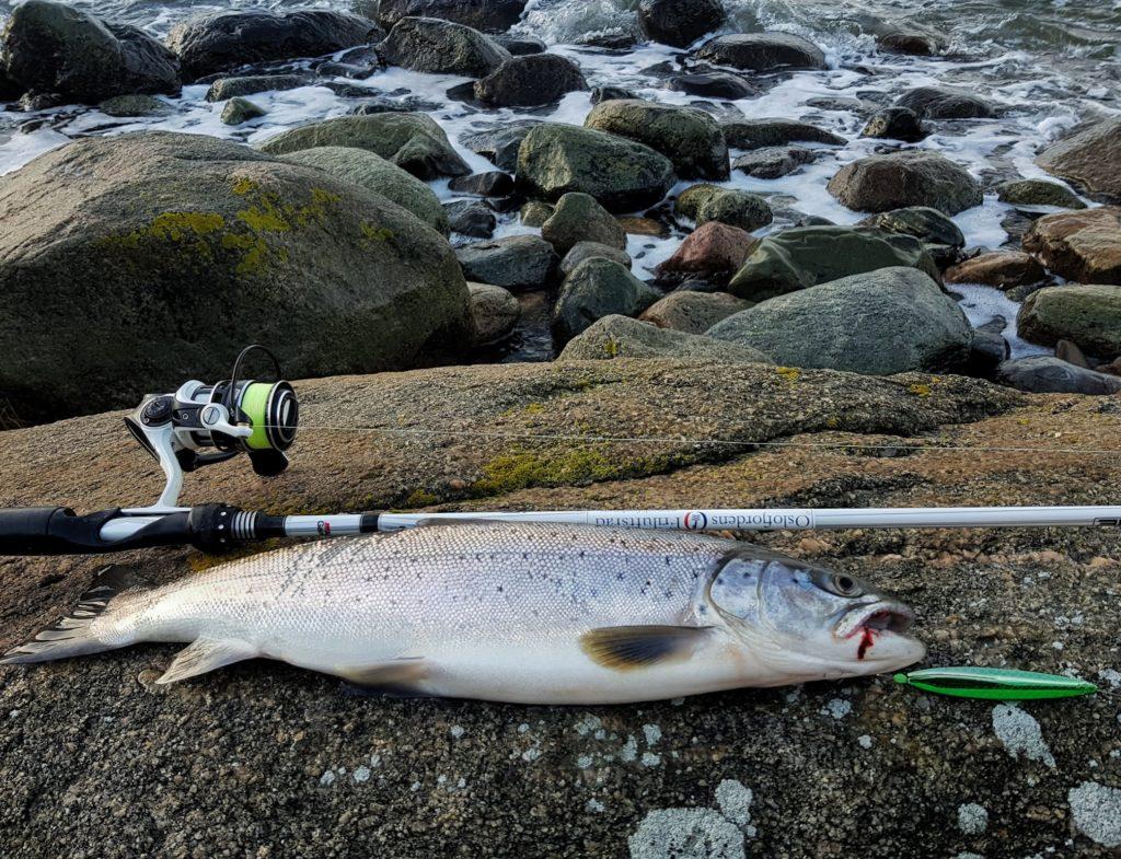 Sjøørret Hvaler. Fisket av Bjørn Tore Kjølholt.