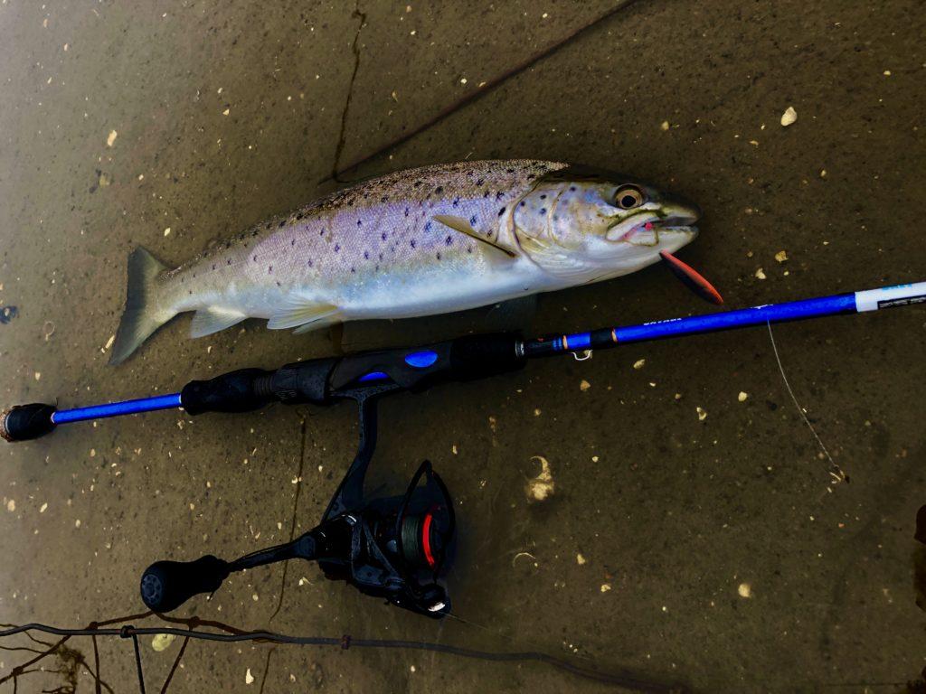 Sjøørret fisket av Bjørn Tore Kjølholt. Rosareke.